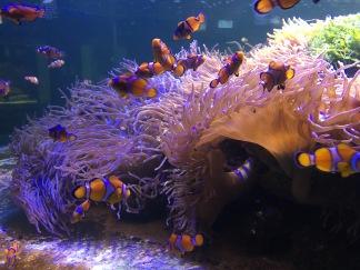 clownfish!!!
